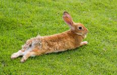 Rabbits may live in forests.