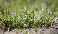 Keeping the grass short may help control pests.