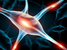 Neurons are cells located in the brain that are used by the nervous system to regulate the rest of the body.