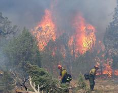 Prescribed burns are sometimes set in order to reduce the amount of fuel for wildfires.