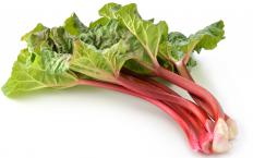The leafy, poisonous portion of the rhubarb plant should be discarded before baking.