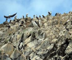 Rocks stained with guano from sea birds.