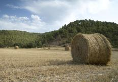 Determining the type of bales desired, such as a round or square bale, can help determine which used baler is best.