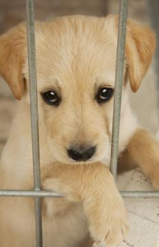 Dogs can be put in large crates when you are gone for short periods of time.