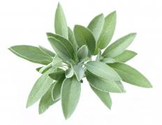 Sage is among the many ingredients used in Phytodefrisant.