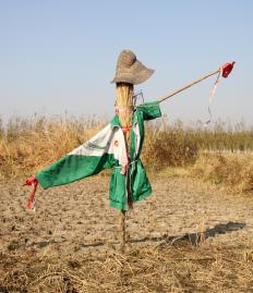 Straw is often used to create scarecrows.