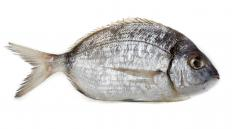 The sea bream is a member of the pomfret family of fish.