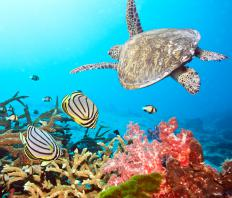 Sea animals swimming near a coral reef in a marine reserve.