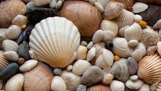 Seashells were one of the varied items used in Roman mosaics.