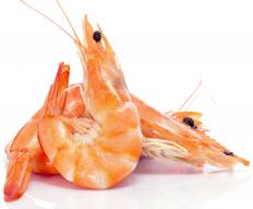 Shrimp are smaller than prawns and also have branching gills.