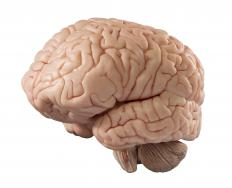 Brain bruising can cause bleeding in the tissues of the brain.