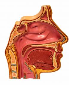Maxillary antrostomy may be performed to treat chronic sinusitis.