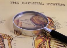 The human skeletal system is comprised of bones, joints, cartilage, ligaments and tendons.