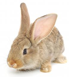 Rabbits may be used to create fur coats.