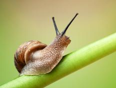 Terrestrial snails, most of which are classified in the order Stylommatophora, usually live in moist environments.