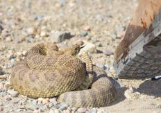 Elevated troponin levels may be caused by a poisonous snake bite.