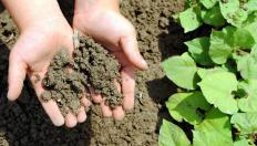 The moisture content of soil is directly related to what types of plants can grow in it.
