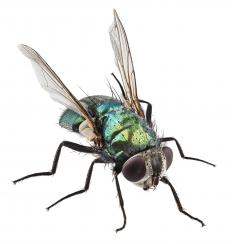 Flies are some of the most common biting insects.