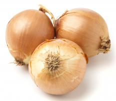 Spanish onions are large and round.