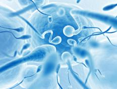 Sperm contain half the number of chromosomes necessary to create an embryo when joined with an ovum.