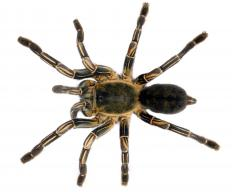 Entomophobia may include arachnophobia, the fear of spiders.