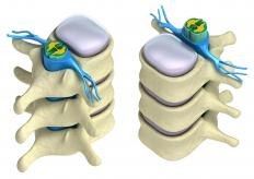 The dorsal column is located at the rear of the spinal cord.