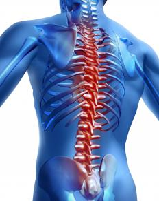The fasciculus gracilis is located in the spinal cord.