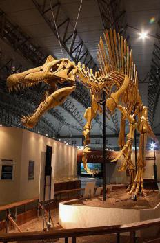 Dinosaurs were the dominant creatures during the Mesozoic period.