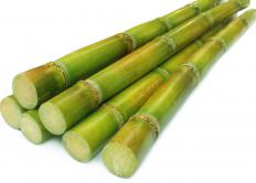 Sugarcane, which is grown in Mauritius.