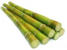 Sugar cane is often grown with sub-irrigation.