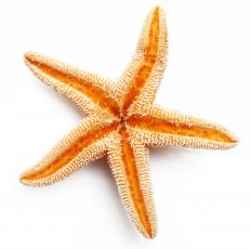 Starfish are invertebrates with multiple radiating arms.