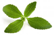 Stevia requires warmth to grow.