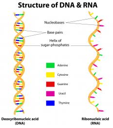 In genetics, annealing refers to the process where DNA and RNA form a double-stranded polynucleotide.