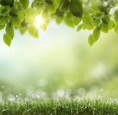 Photosynthesis is a process plants use to convert sunlight into nourishment.