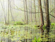 Swamps flourished during the Carboniferous period.