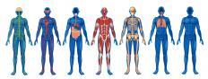 Medical physiology is concerned with how the body's systems function.