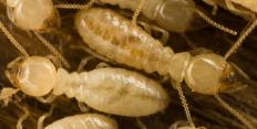 Meshes and other barriers keep termites from penetrating home structures.