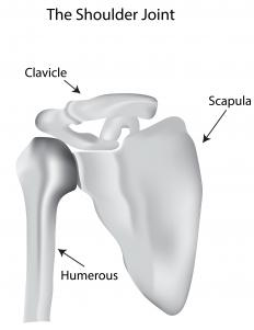 The ball and socket joint of the human shoulder is a style of ball joint.