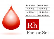 Blood groups in the Rhesus Factor system.