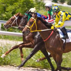 Individual horses carry differing amounts of weight in handicap races.