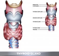 Thyroid stimulating hormone regulates the function of the thyroid gland.