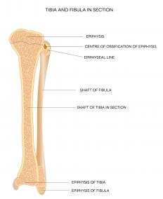 Gerdy's tubercle is located at the tibia right below the knee joint.