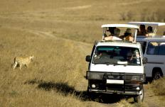 Safaris are a type of adventure tour.