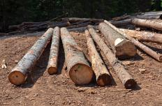 Logs prior to lumber manufacturing.