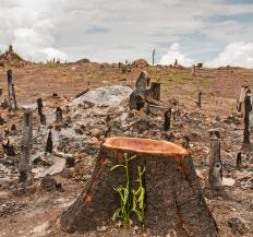 Some scientists say deforestation has wiped out as much as 80 percent of the world's rainforests.