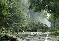 """The term """"culprit"""" may refer to the cause of a negative event, such as a storm causing downed trees and damage."""