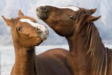 Intestinal colic is commonly seen in horses.