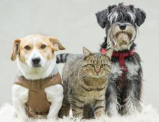Check the requirements for importing a pet into a foreign country months before you go.
