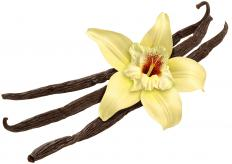 Vanilla extract is derived from the fermentation of vanilla beans.