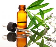 Lemon verbena essential oil is a popular ingredient in fragrances.